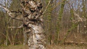 Tanösvény az egykori királyi kamarások erdőbirtokán