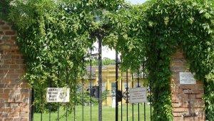 Természetvédelmi oltalom védi a Corvinus budai területén lévő arborétumot